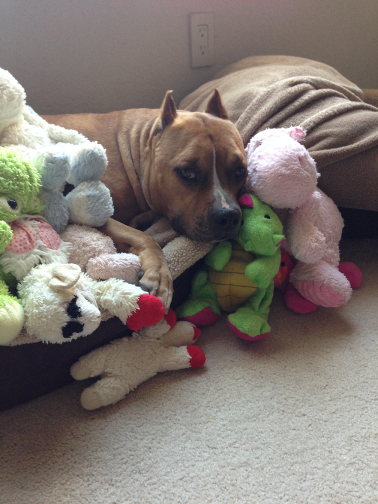 Clyde taking a snooze with his friends