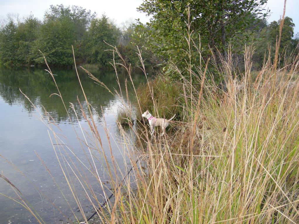 Zuzu birdwatching at the river